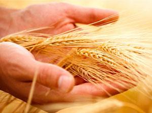 Mezőgazdasági biztosítások